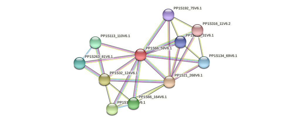 PP1S66_59V6.1 protein (Physcomitrella patens) - STRING interaction network