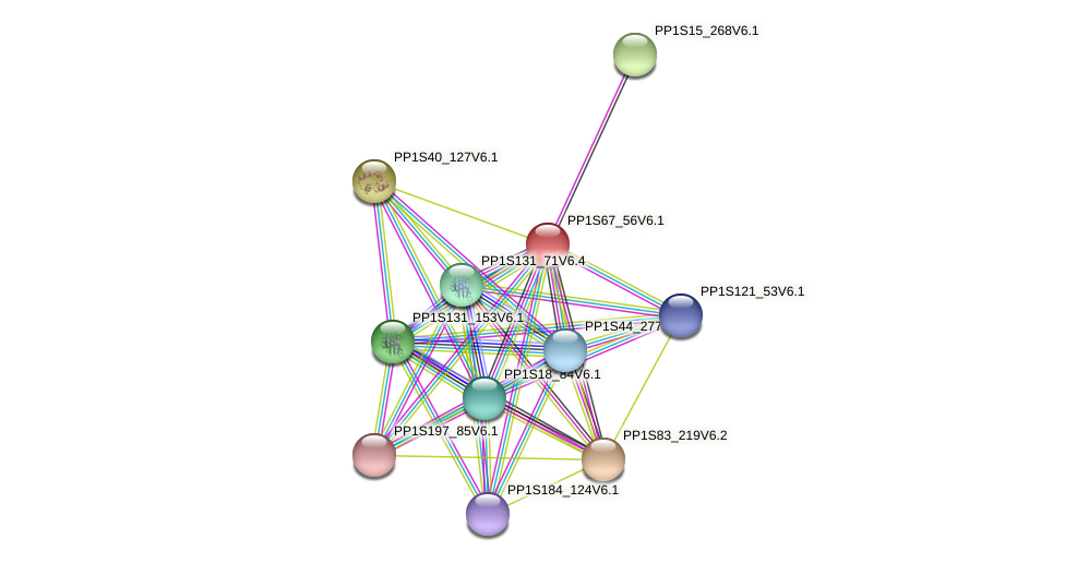 PP1S67_56V6.1 protein (Physcomitrella patens) - STRING interaction network