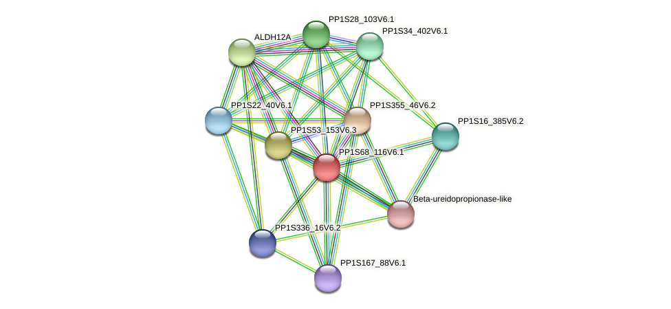 PP1S68_116V6.1 protein (Physcomitrella patens) - STRING interaction network
