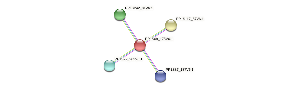 PP1S68_175V6.1 protein (Physcomitrella patens) - STRING interaction network
