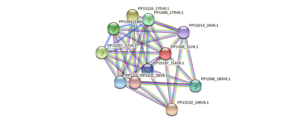 PP1S68_31V6.1 protein (Physcomitrella patens) - STRING interaction network