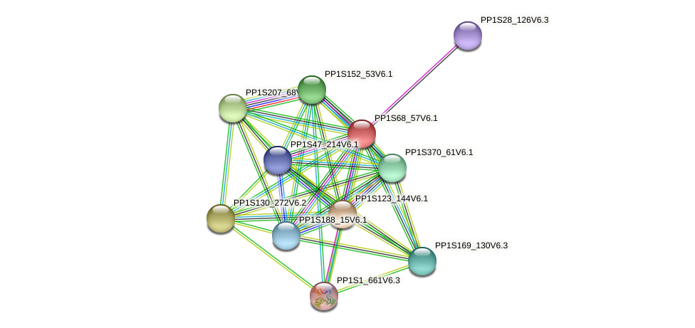 PP1S68_57V6.1 protein (Physcomitrella patens) - STRING interaction network