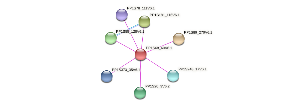 PP1S68_60V6.1 protein (Physcomitrella patens) - STRING interaction network