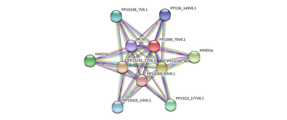 PP1S68_75V6.1 protein (Physcomitrella patens) - STRING interaction network