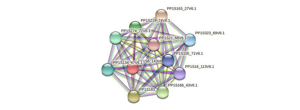 PP1S6_143V6.1 protein (Physcomitrella patens) - STRING interaction network
