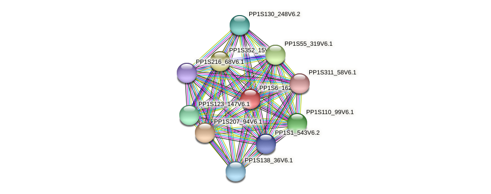 PP1S6_162V6.1 protein (Physcomitrella patens) - STRING interaction network