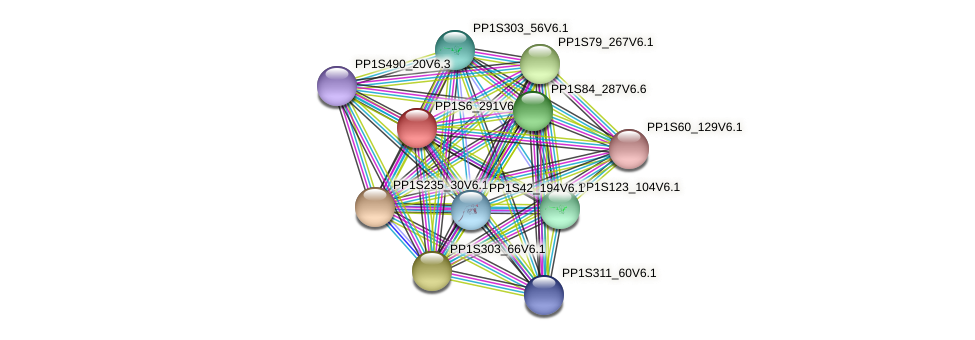 PP1S6_291V6.1 protein (Physcomitrella patens) - STRING interaction network