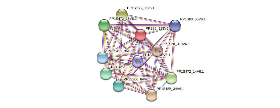 PP1S6_313V6.1 protein (Physcomitrella patens) - STRING interaction network