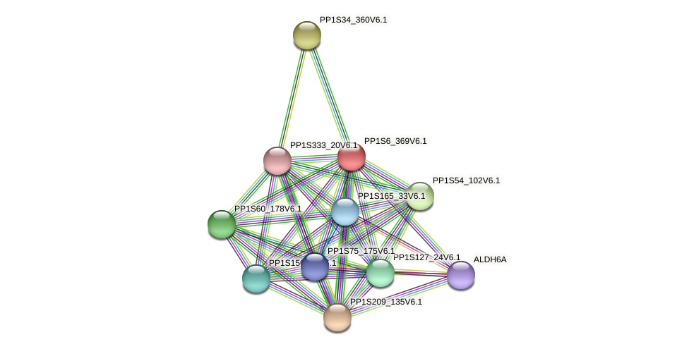 PP1S6_369V6.1 protein (Physcomitrella patens) - STRING interaction network