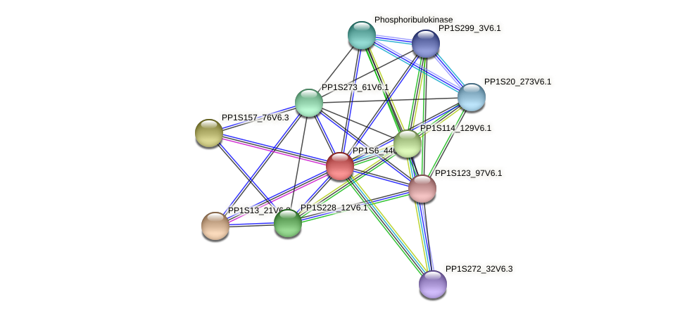 PP1S6_440V6.1 protein (Physcomitrella patens) - STRING interaction network