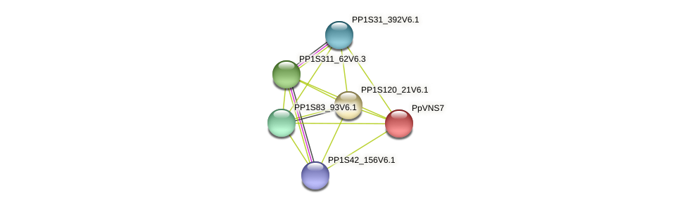 PP1S6_458V6.1 protein (Physcomitrella patens) - STRING interaction network