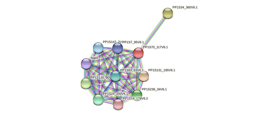 PP1S70_117V6.1 protein (Physcomitrella patens) - STRING interaction network