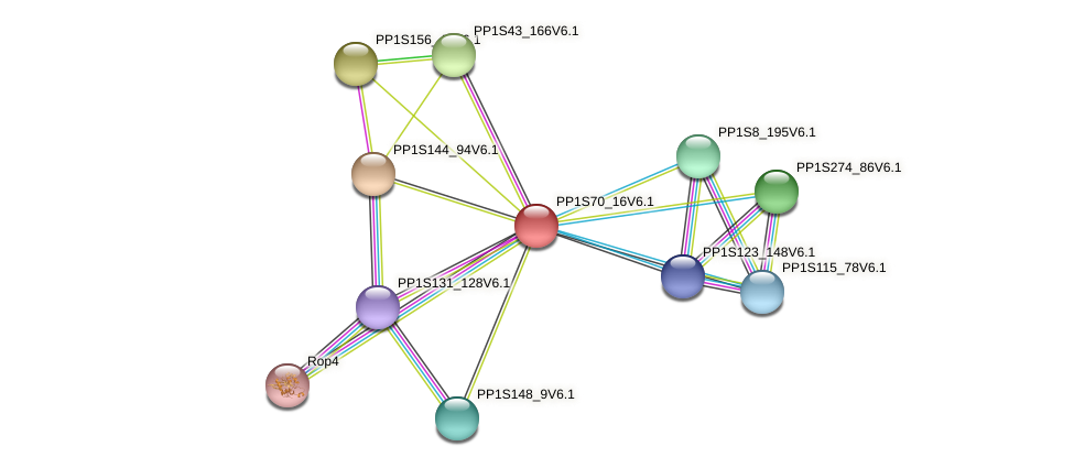 PP1S70_16V6.1 protein (Physcomitrella patens) - STRING interaction network