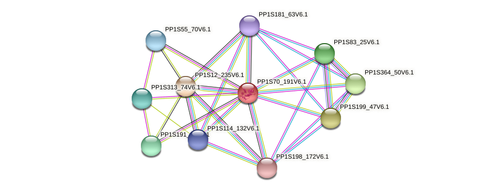 PP1S70_191V6.1 protein (Physcomitrella patens) - STRING interaction network