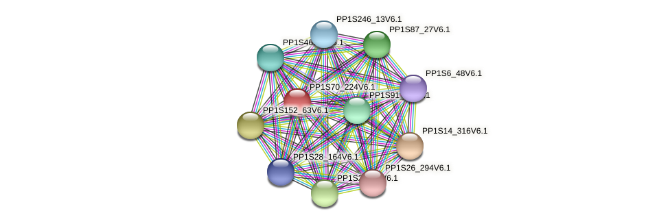PP1S70_224V6.1 protein (Physcomitrella patens) - STRING interaction network