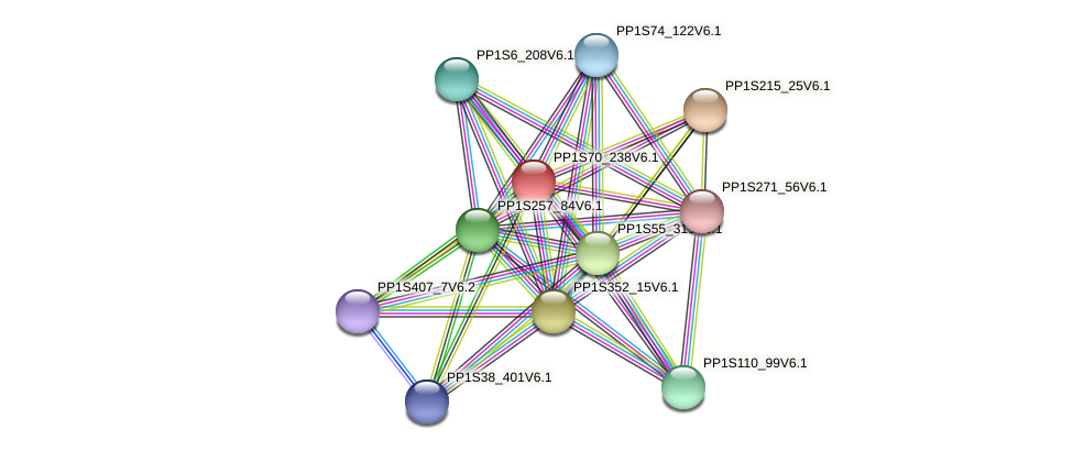 PP1S70_238V6.1 protein (Physcomitrella patens) - STRING interaction network