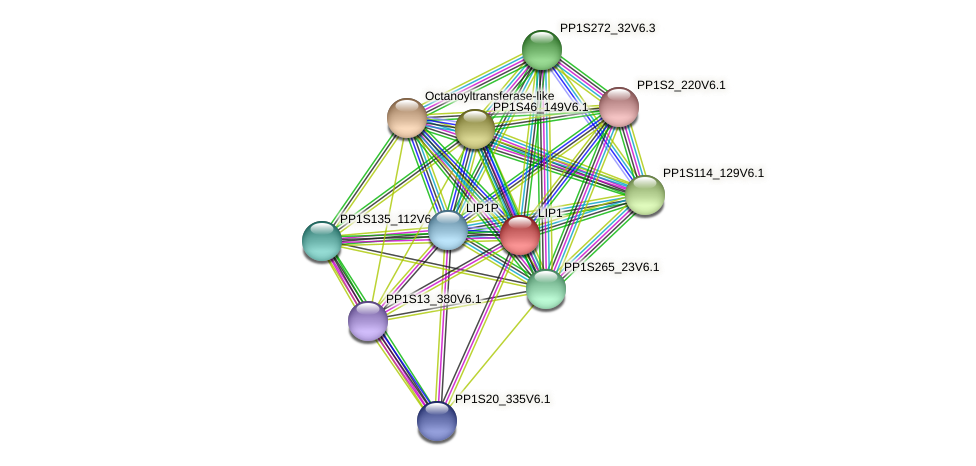 PP1S70_295V6.1 protein (Physcomitrella patens) - STRING interaction network