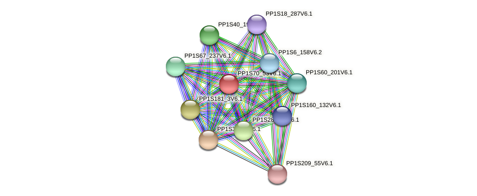 PP1S70_53V6.1 protein (Physcomitrella patens) - STRING interaction network