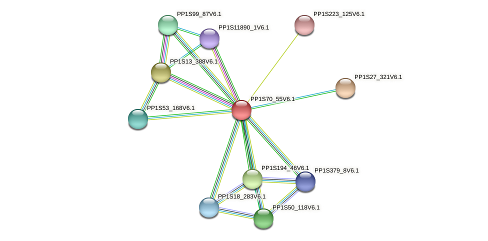 PP1S70_55V6.1 protein (Physcomitrella patens) - STRING interaction network
