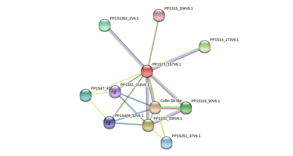 PP1S71_157V6.1 protein (Physcomitrella patens) - STRING interaction network