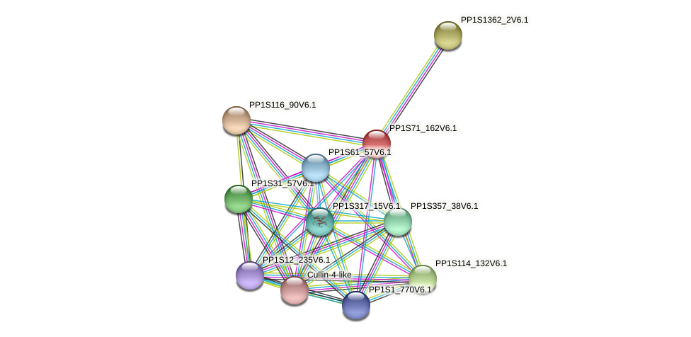 PP1S71_162V6.1 protein (Physcomitrella patens) - STRING interaction network
