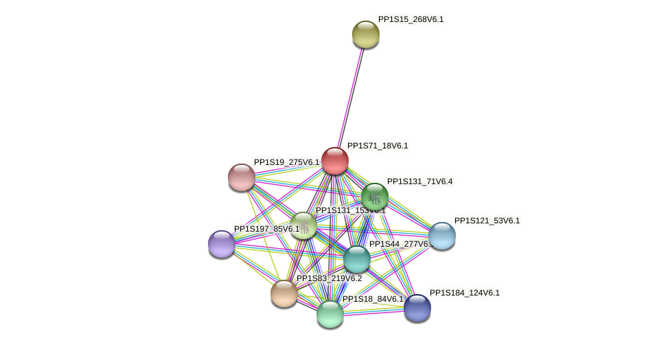 PP1S71_18V6.1 protein (Physcomitrella patens) - STRING interaction network