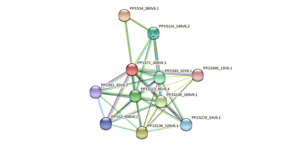 PP1S71_304V6.1 protein (Physcomitrella patens) - STRING interaction network