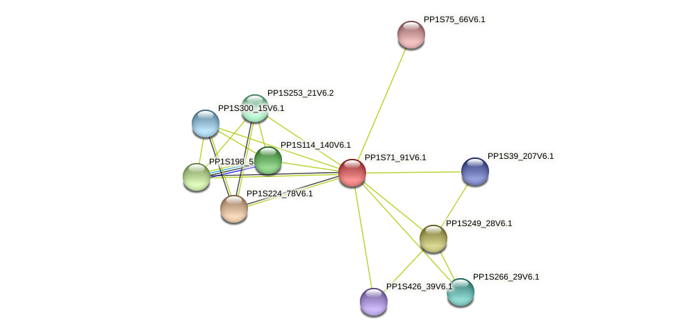 PP1S71_91V6.1 protein (Physcomitrella patens) - STRING interaction network
