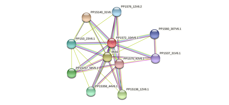 PP1S72_104V6.1 protein (Physcomitrella patens) - STRING interaction network