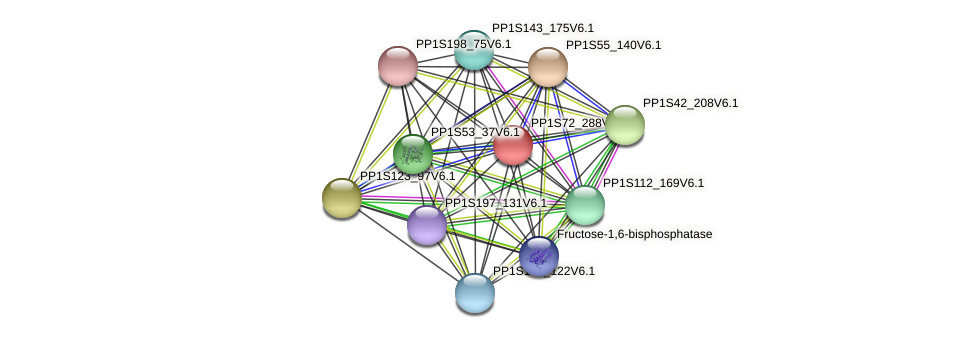 PP1S72_288V6.1 protein (Physcomitrella patens) - STRING interaction network