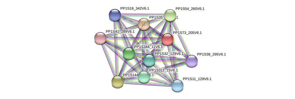 PP1S73_205V6.1 protein (Physcomitrella patens) - STRING interaction network