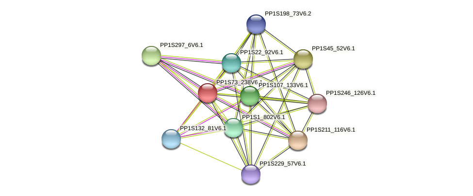 PP1S73_238V6.1 protein (Physcomitrella patens) - STRING interaction network
