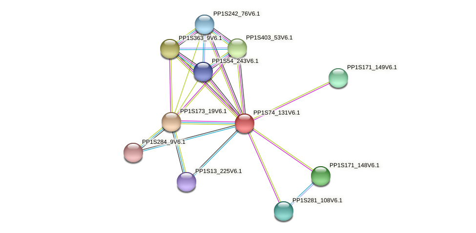 PP1S74_131V6.1 protein (Physcomitrella patens) - STRING interaction network