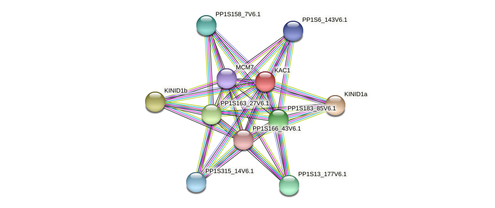 PP1S74_159V6.1 protein (Physcomitrella patens) - STRING interaction network