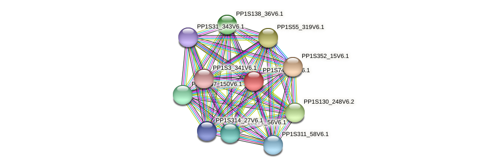 PP1S74_170V6.1 protein (Physcomitrella patens) - STRING interaction network
