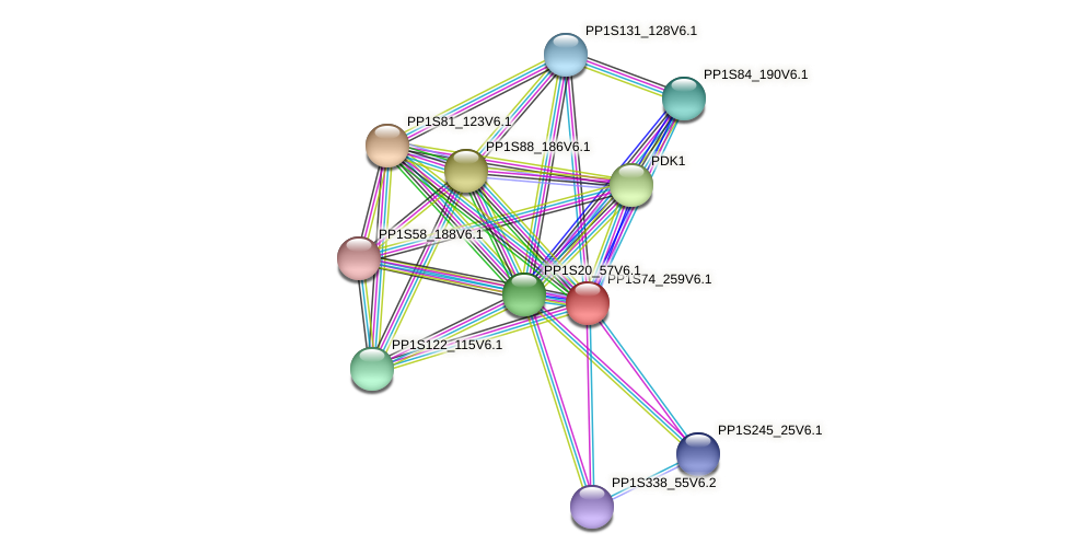 PP1S74_259V6.1 protein (Physcomitrella patens) - STRING interaction network
