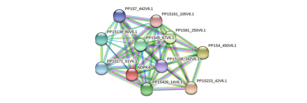 NDPK4 protein (Physcomitrella patens) - STRING interaction network