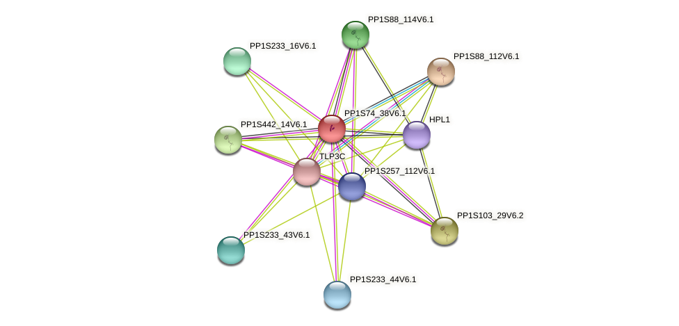 PP1S74_38V6.1 protein (Physcomitrella patens) - STRING interaction network