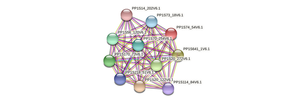 PP1S74_54V6.1 protein (Physcomitrella patens) - STRING interaction network