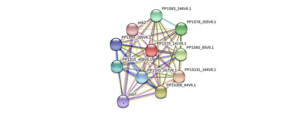PP1S75_141V6.1 protein (Physcomitrella patens) - STRING interaction network