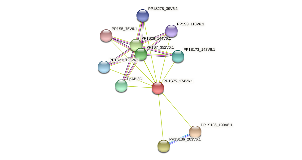PP1S75_174V6.1 protein (Physcomitrella patens) - STRING interaction network