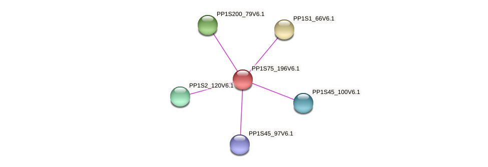 PP1S75_196V6.1 protein (Physcomitrella patens) - STRING interaction network