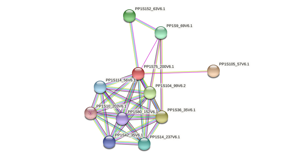 PP1S75_200V6.1 protein (Physcomitrella patens) - STRING interaction network