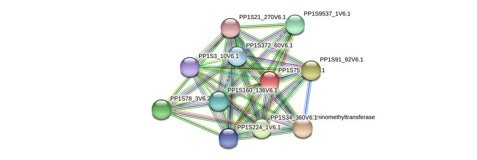 PP1S75_253V6.1 protein (Physcomitrella patens) - STRING interaction network