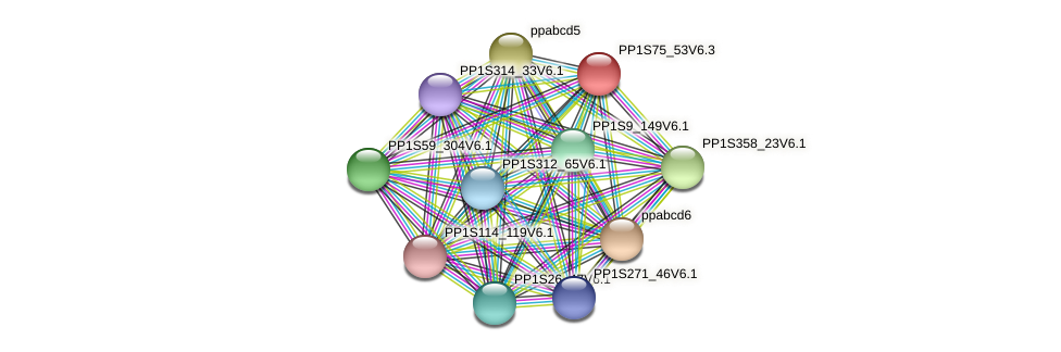 PP1S75_53V6.1 protein (Physcomitrella patens) - STRING interaction network