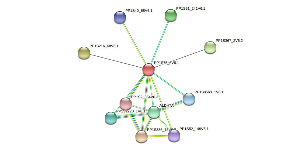 PP1S75_5V6.1 protein (Physcomitrella patens) - STRING interaction network