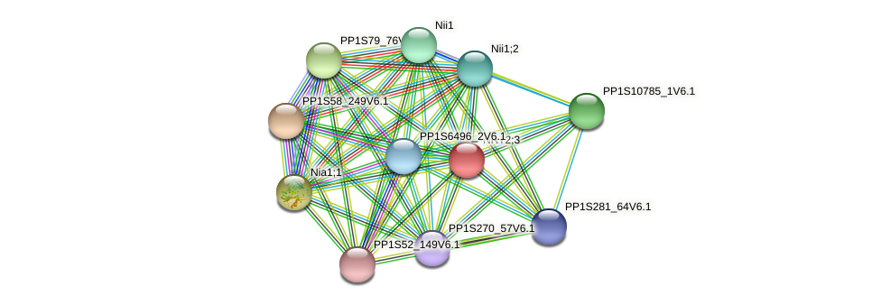 PP1S75_75V6.1 protein (Physcomitrella patens) - STRING interaction network