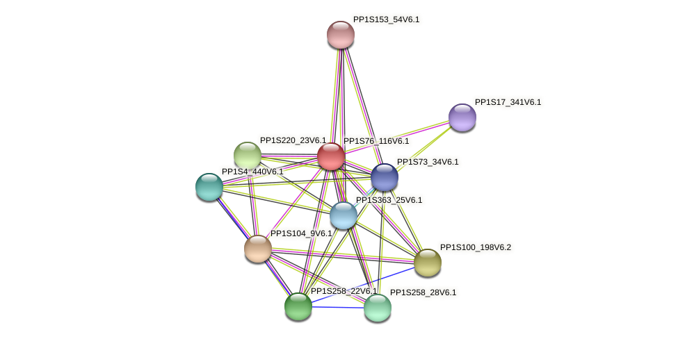 PP1S76_116V6.1 protein (Physcomitrella patens) - STRING interaction network