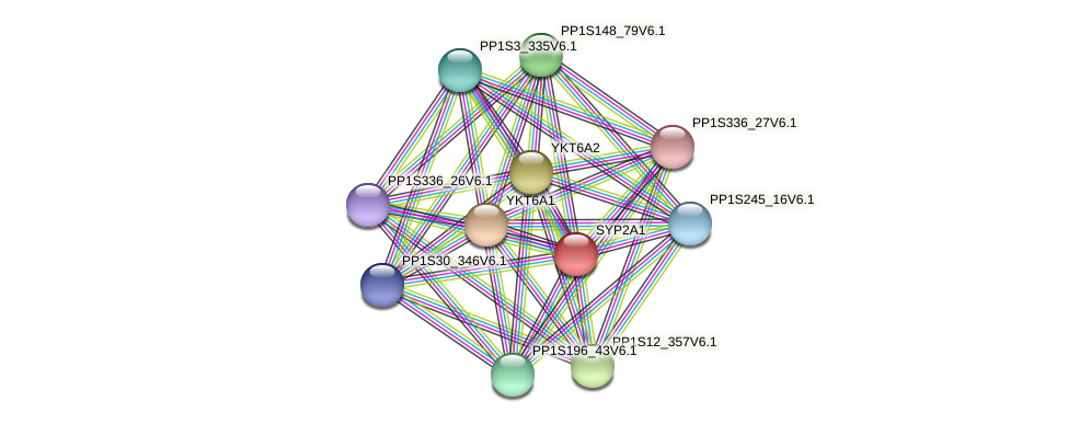 SYP2A1 protein (Physcomitrella patens) - STRING interaction network