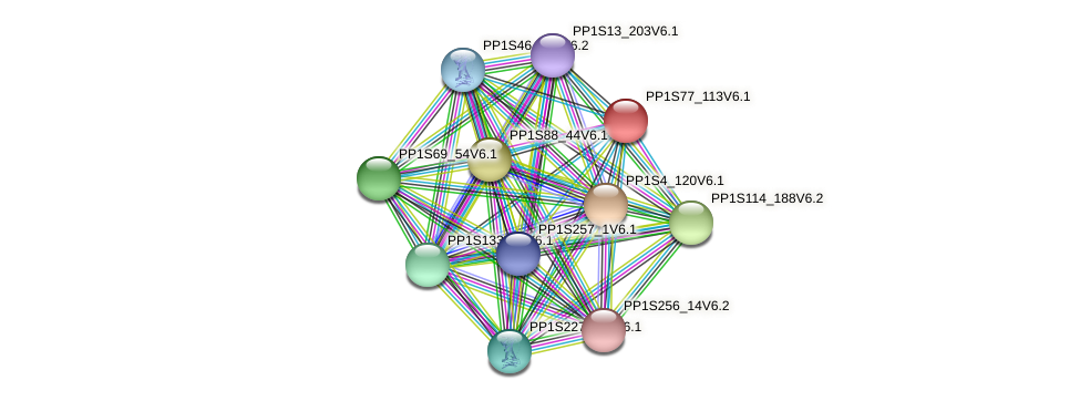 PP1S77_113V6.1 protein (Physcomitrella patens) - STRING interaction network